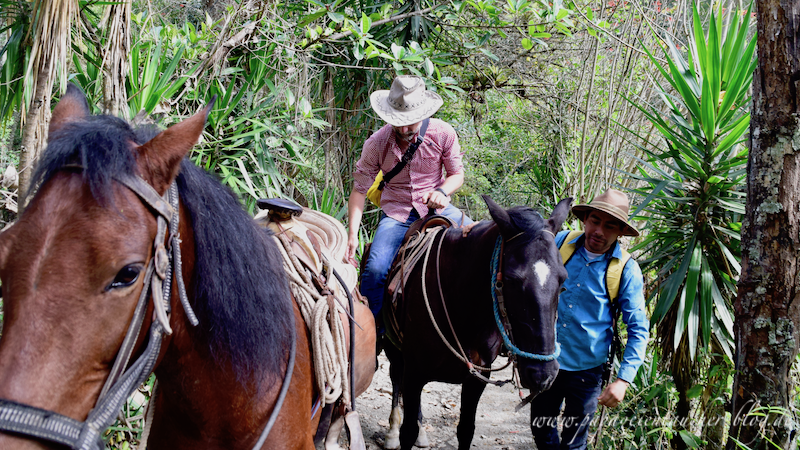 Vilcabamba Ecuador Horseback Riding Podocarpus Nationalpark Start