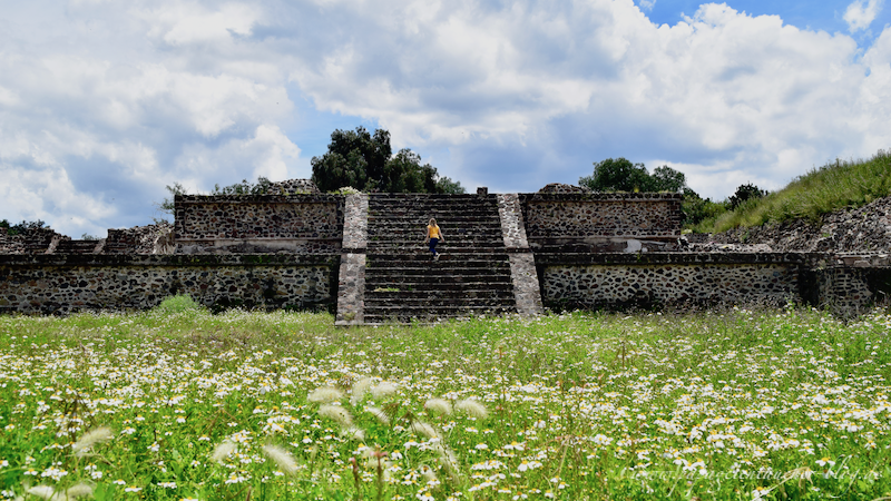 Tempel teotihuacan blumenwiese mexico